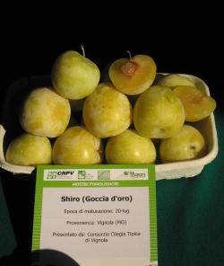 Realizzata da Image Line presso Mostra pomologica Vignola Mercato agroalimentare 31.08.05 (CRPV)