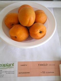 foto varieta Farclo