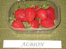 foto varieta Albion
