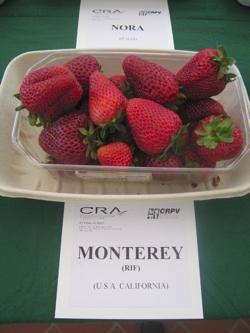 foto varieta Monterey