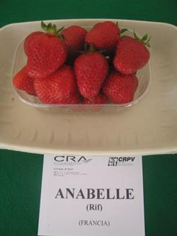 foto varieta Anabelle