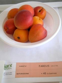 foto varieta Farius