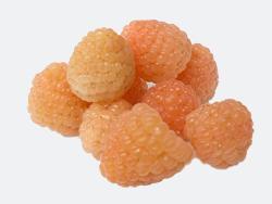 foto varieta Apricot