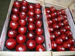 foto varieta Queen red