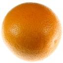 foto arance - fonte: www.Plantgest.it