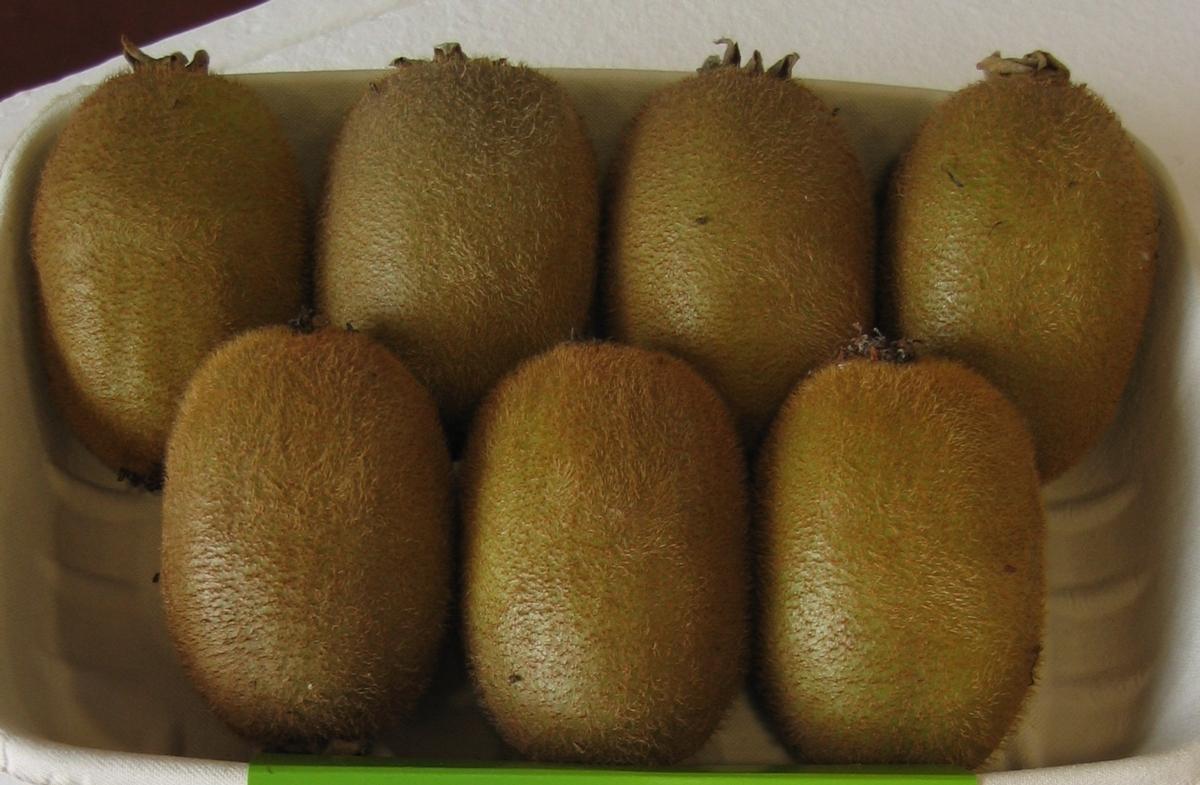Actinidia deliciosa Hayward clone 8 - Plantgest.com