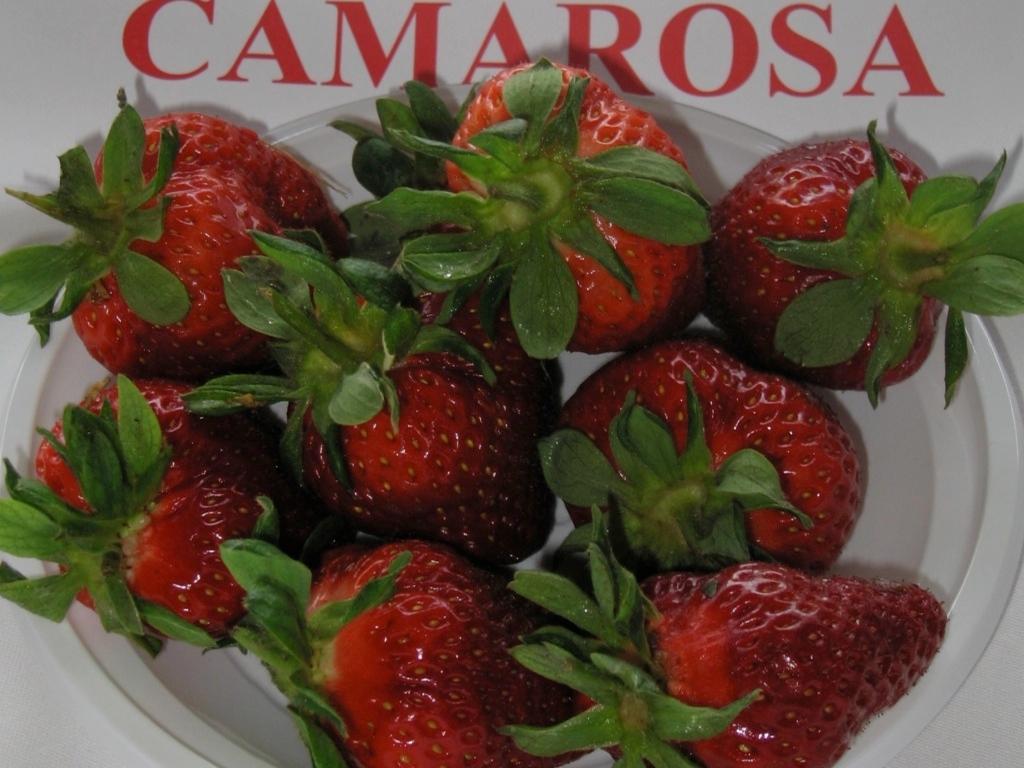 Fragola Camarosa - Plantgest.com