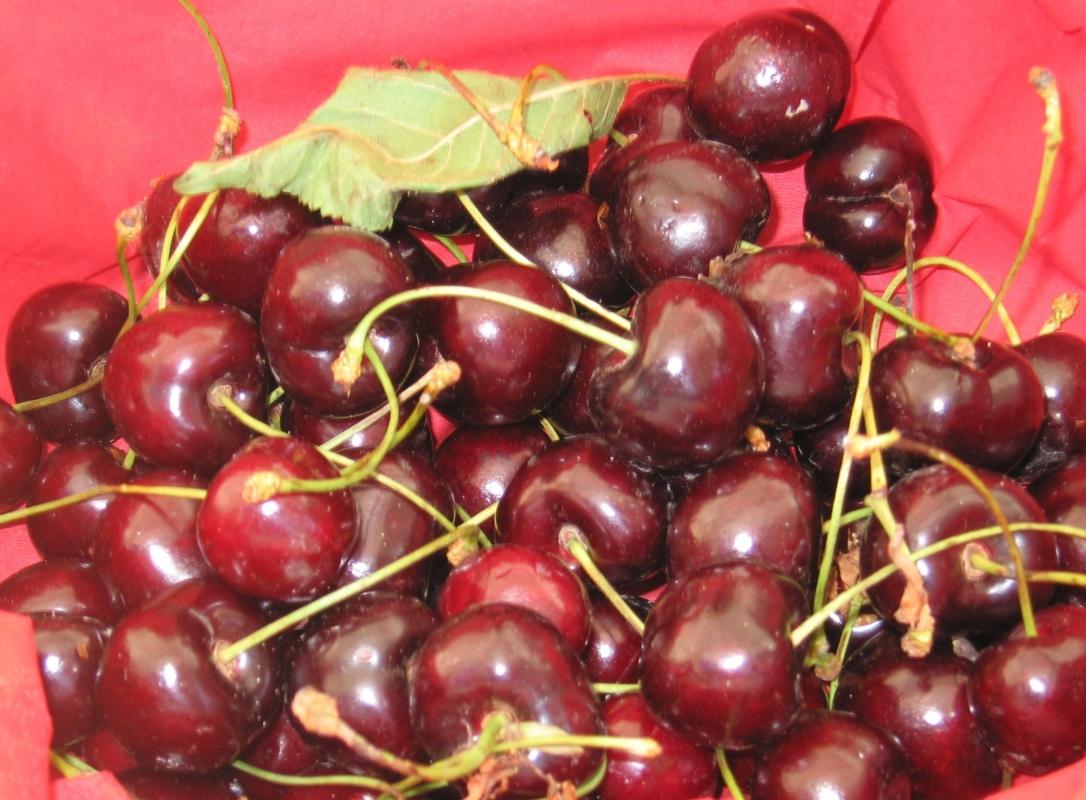 Ciliegio dolce Kordia - Plantgest.com