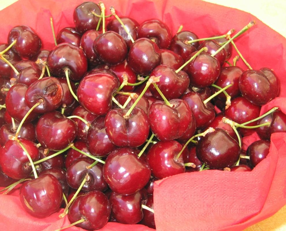 Ciliegio dolce Van - Plantgest.com