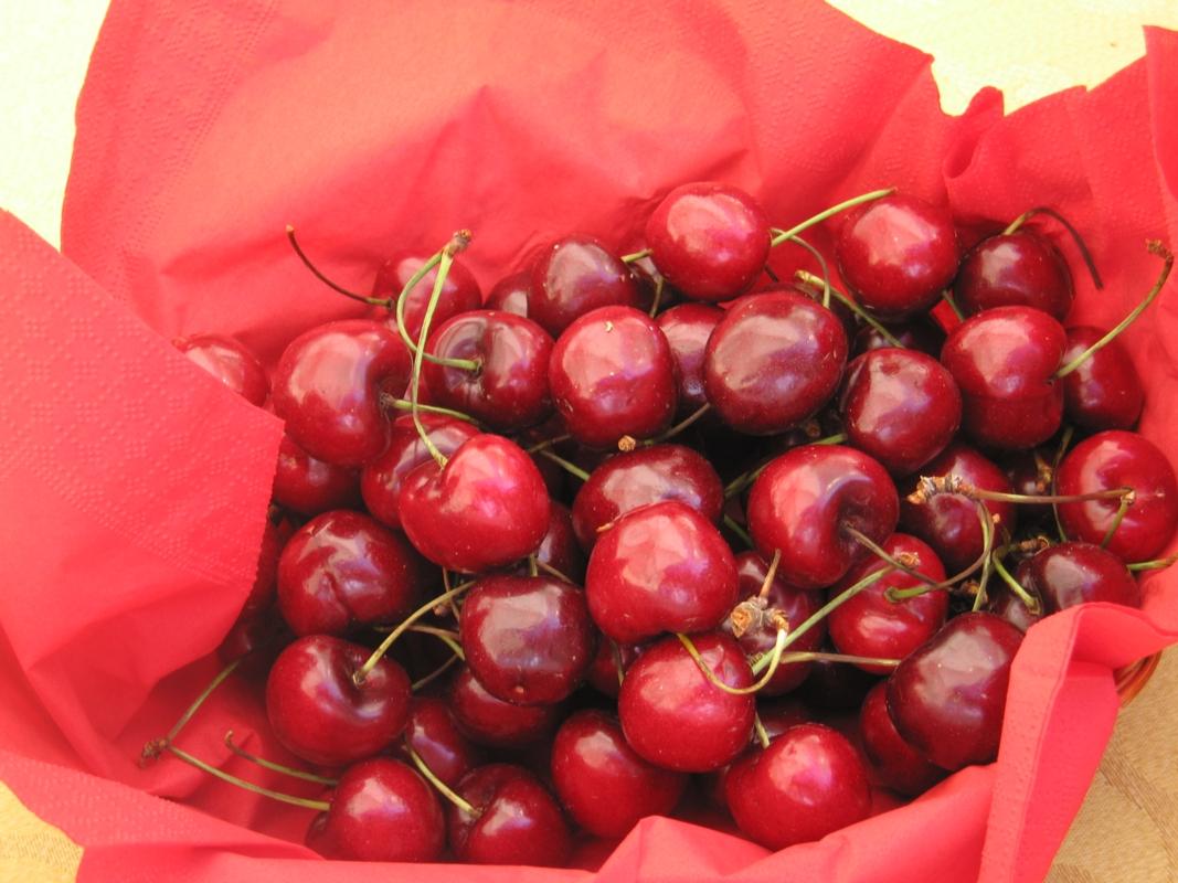 Ciliegio dolce Skeena - Plantgest.com