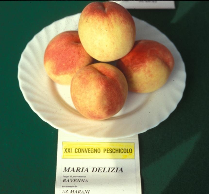 Pesco a polpa bianca Maria Delizia - Plantgest.com