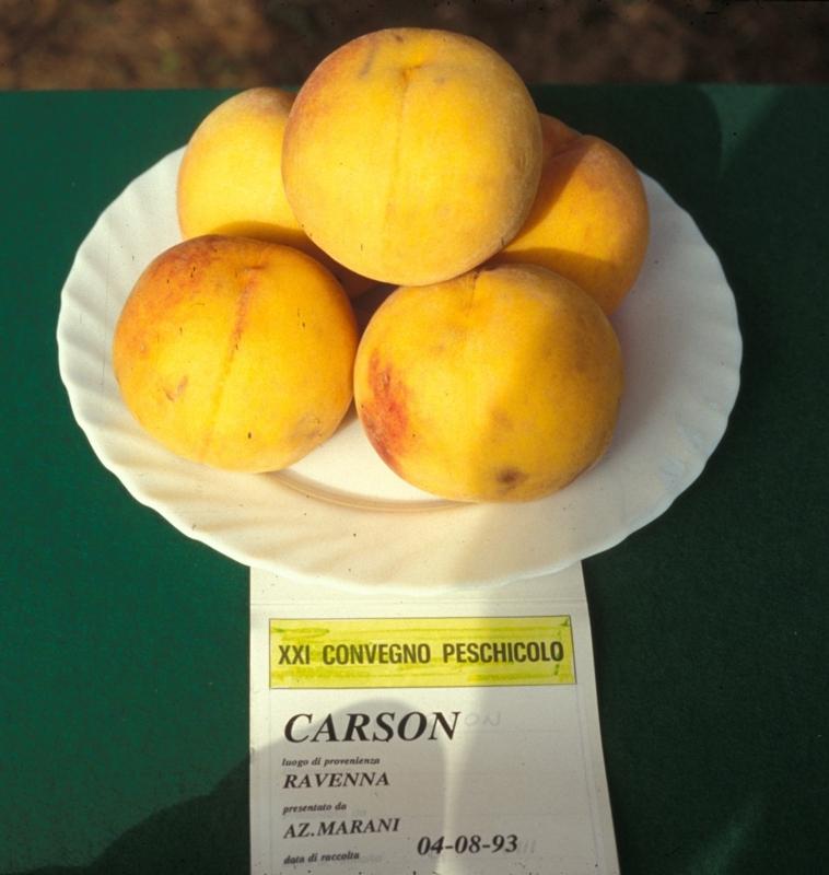 Percoca Carson - Plantgest.com