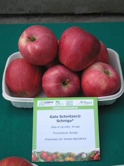 Melo Gala Schnitzer - Plantgest.com