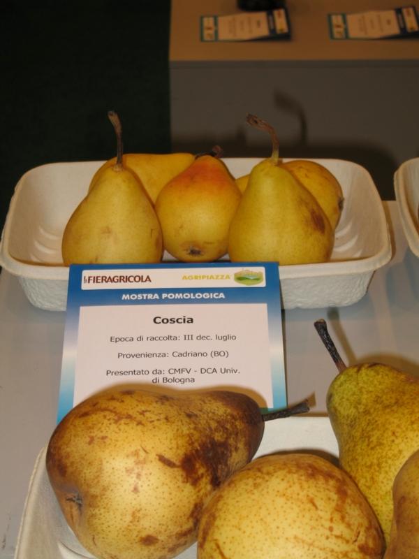 Pero Coscia - Plantgest.com