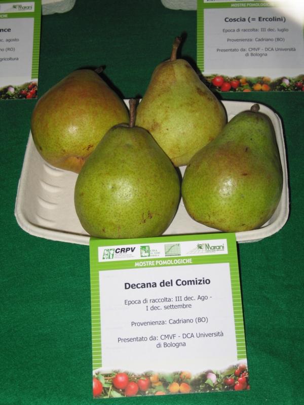 Pero Decana del Comizio - Plantgest.com