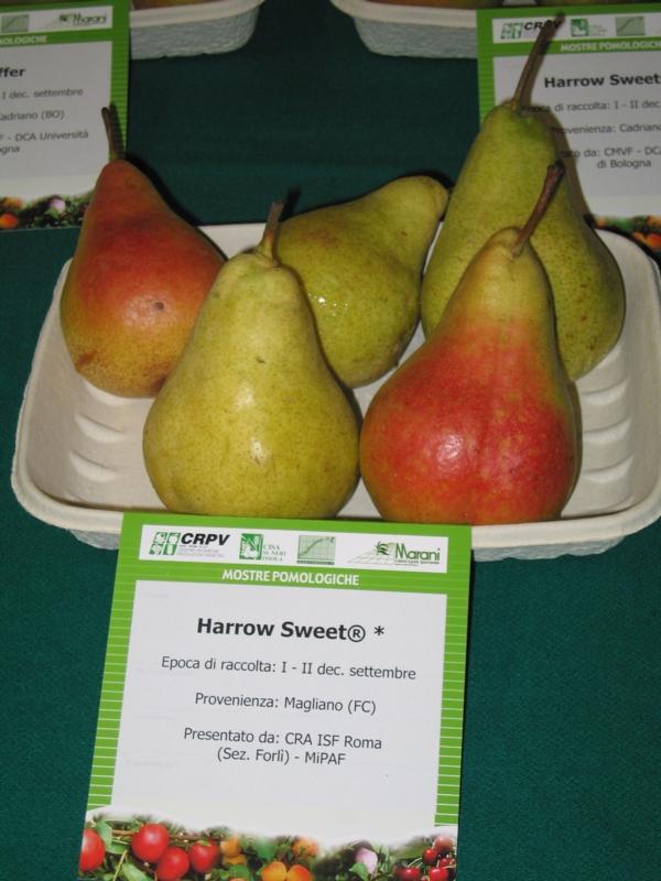 Pero Harrow sweet - Plantgest.com