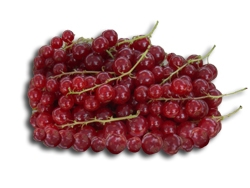 Ribes rosso Jonkheer Van Tets - Plantgest.com