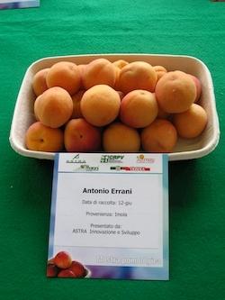 Albicocco Antonio Errani - Plantgest.com