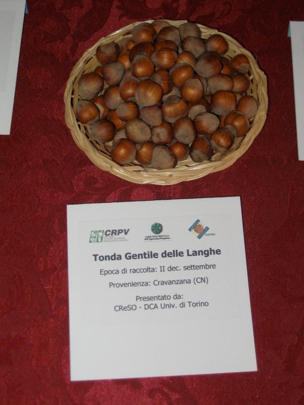 Nocciolo Tonda Gentile delle Langhe - Plantgest.com