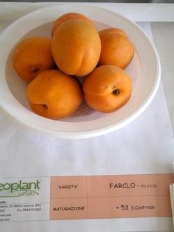 Albicocco Farclo - Plantgest.com