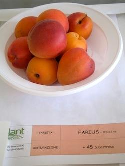 Albicocco Farius - Plantgest.com