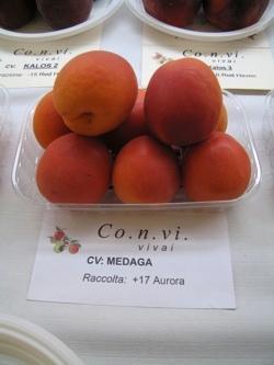 Albicocco Medaga - Plantgest.com
