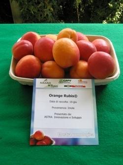 Albicocco Orange Rubis - Plantgest.com