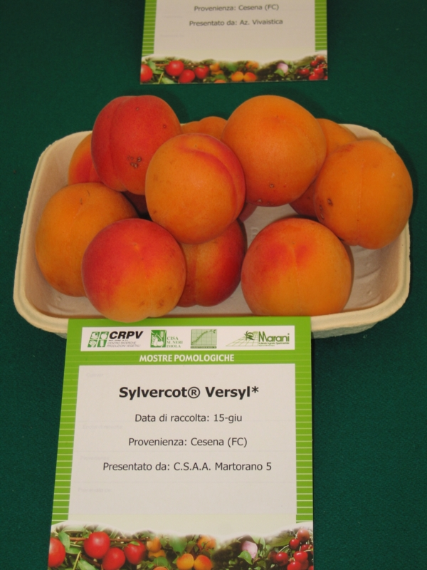 Albicocco Sylvercot - Plantgest.com