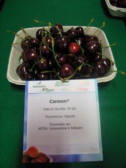 Ciliegio dolce Carmen - Plantgest.com