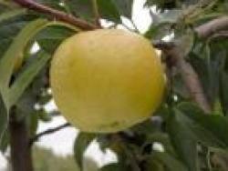 Melo Belchard - Plantgest.com