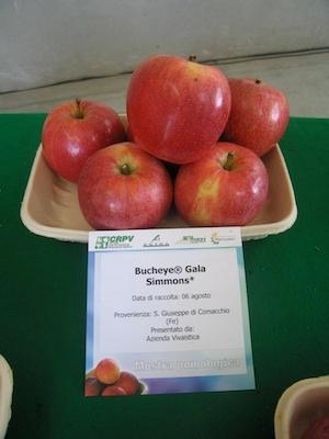 Melo Buckeye®  Gala - Plantgest.com