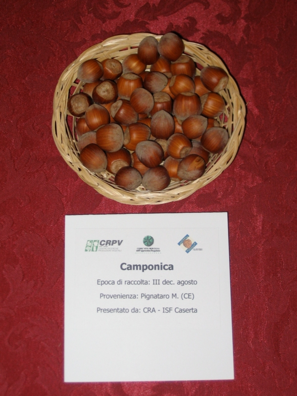 Nocciolo Camponica - Plantgest.com