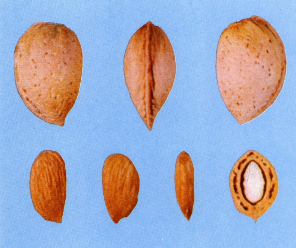 Mandorlo Tuono - Plantgest.com