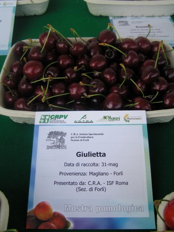 Ciliegio dolce Giulietta - Plantgest.com