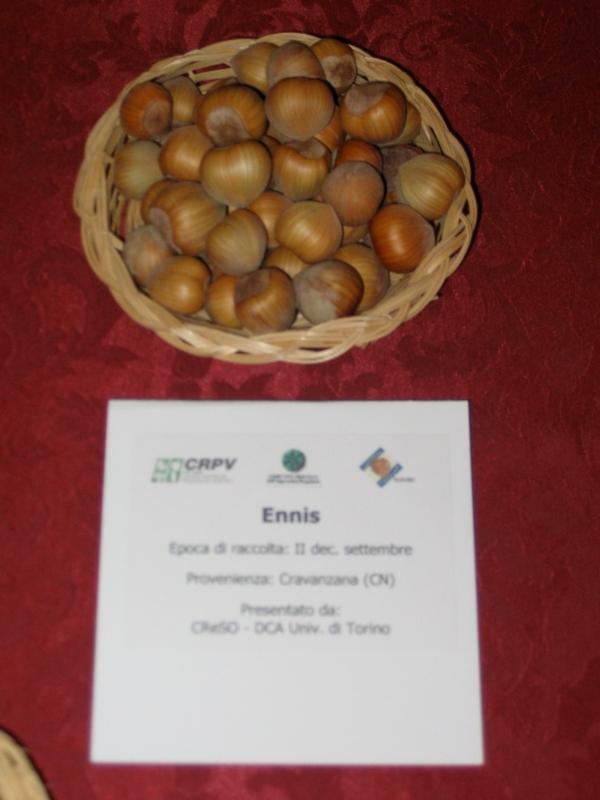 Nocciolo Ennis - Plantgest.com