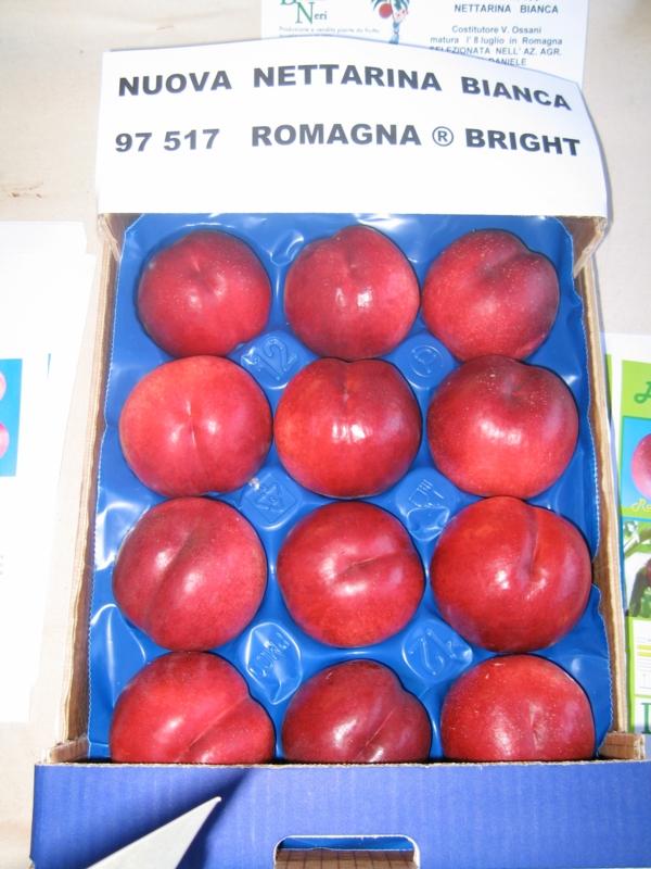 Nettarina a polpa bianca Romagna Bright - Plantgest.com