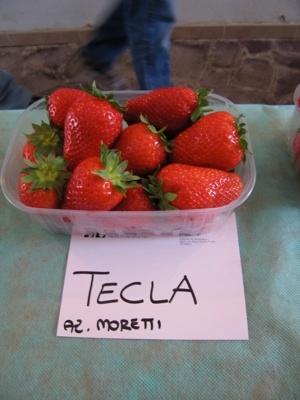 Fragola Tecla - Plantgest.com