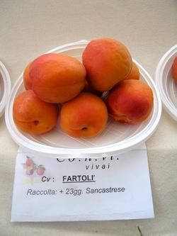 Albicocco Fartoli - Plantgest.com