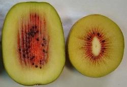 Actinidia chinensis Dong Hong - Plantgest.com