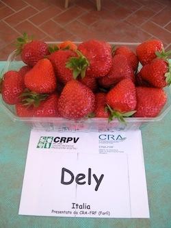 Fragola Dely - Plantgest.com