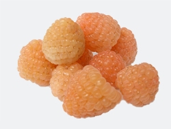 Lampone rosso Apricot - Plantgest.com