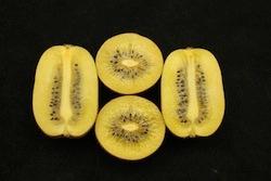 Actinidia chinensis Jynyan - Plantgest.com