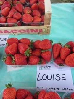 Fragola Louise - Plantgest.com