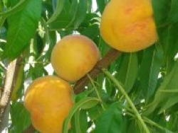 Percoca Silos - Plantgest.com