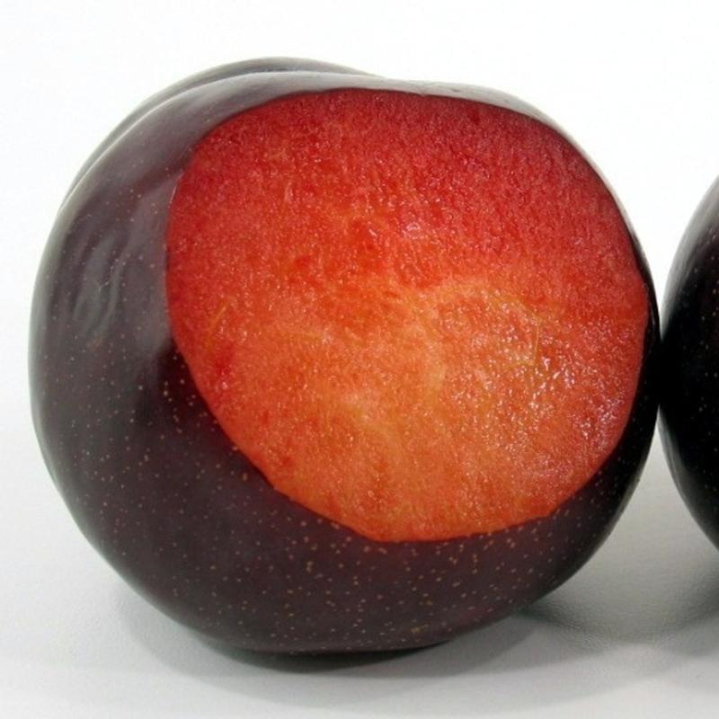 Susino cino-giapponese Black Diamond - Plantgest.com