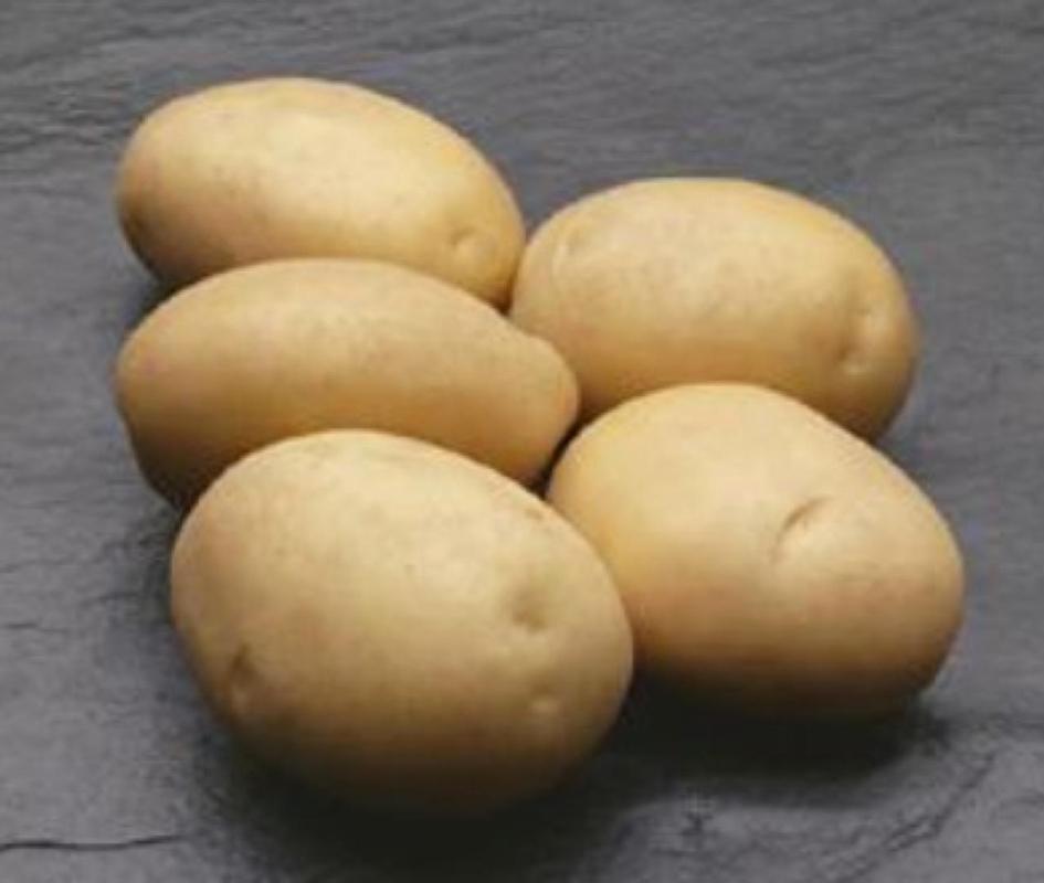 Patata Ambra - Plantgest.com
