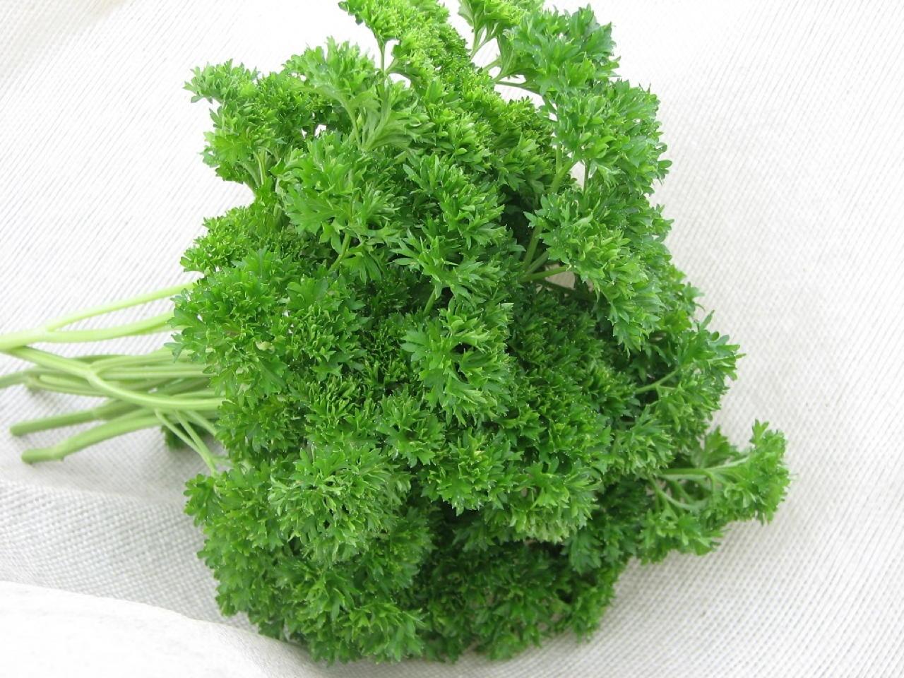 Prezzemolo Messis - Plantgest.com